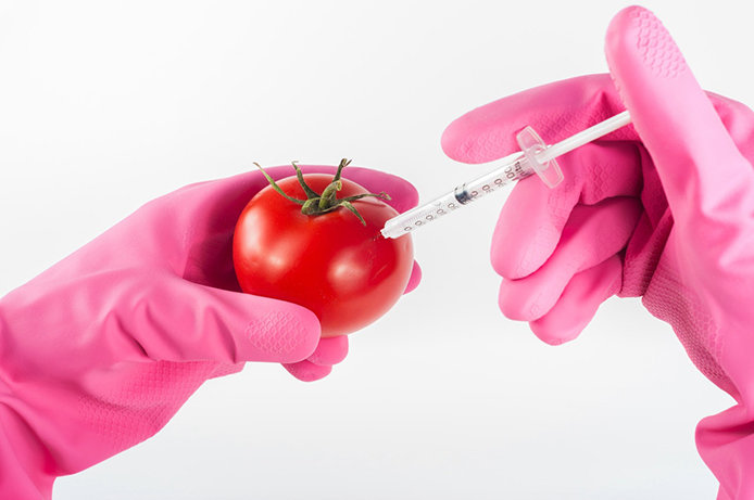 Tomato and Needle